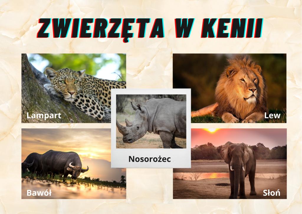 zwierzęta w Kenii